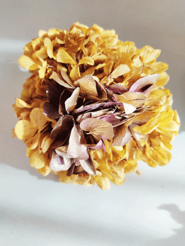 Ramilletes de flores naturales preservadas